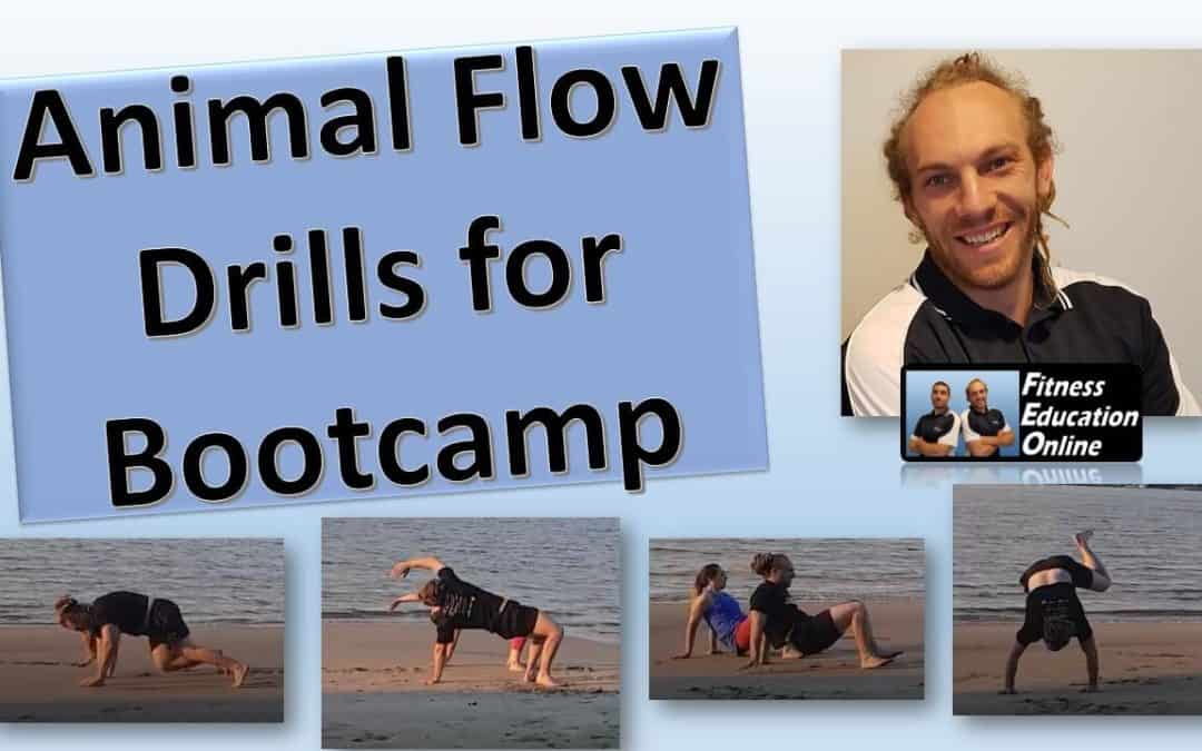 Animal Flow Drills for Bootcamp